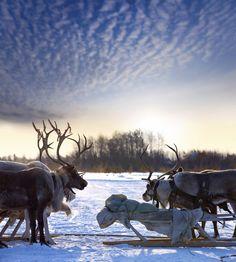 Lapland, Finland www. Winter Scenery, Winter Fun, Helsinki, Beautiful Creatures, Animals Beautiful, Lapland Finland, Lappland, Arctic Circle, Snow Scenes