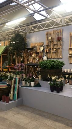 Finish Our orchid set-up was ready the next day. Here is a video of what he looks like now. Indore, Phalaenopsis, It Is Finished, Innsbruck, Modern, Plants, Landscape Nursery, House Plants, Orchids