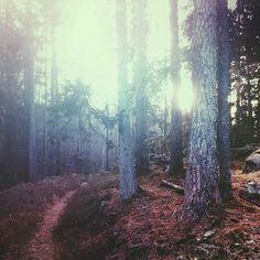 art, awesome, background, beautiful, beauty, dark, dream, fog, foggy, forest, grunge, hipster, instagram, landscape, life, love, lovely, nature, pastel, photography, travel, trees, vintage, wallpaper, wanderlust, wish, woods, )))), dark nature