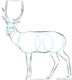 How to draw a white tailed deer | Step by step Drawing tutorials
