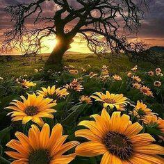 #Repost @capochino67:Beautiful  @cwcream . . . @Regrann from @andresfsilvaa -  #landscape ... via Eric Routenberg. - #regrann