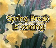 5 Books and 5 Activities for 5 Days Before Spring Break