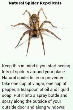 Natural spider repellent