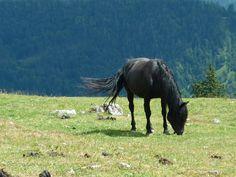 Črni vranec na zeleni podlagi :) #konj #narava #slovenia #gore www.ocistimogore.si