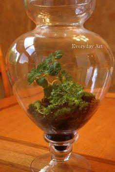 Everyday Art: How to plant a terrarium