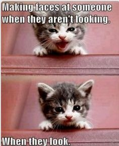 Ha ha ha ha http://www.FunnyBundle.com