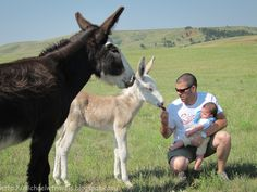 MichaelW Travels...: Hanging With the Burros- Custer, South Dakota