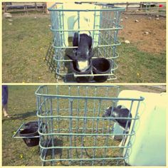 Smart idea! Diy calf pen Cattle Farming, Goat Farming, Livestock, Gado Leiteiro, Cow Pen, Cattle Corrals, Goat Shelter, Goat Barn, Farm Plans