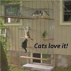 Cheap Enclosure Outdoor Cat Furniture | Room With A View Petit Outdoor Cat Enclosure Cheap #outdoorkittencare