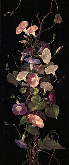 Morning Glories by Hardy, Annie Eliza, 1839-1934 (artist); Copyright date: 1877; Location: Boston Public Library, Print Department