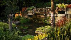 Uma das maiores coleções de plantas vivas do mundo pode ser encontrada no Sítio Roberto Burle Marx
