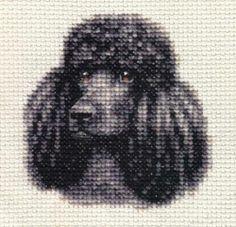 81 Best Poodles Images Poodle Poodle Drawing Dog Quilts