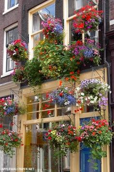 Colorful hanging plants in Amsterdam, Netherlands