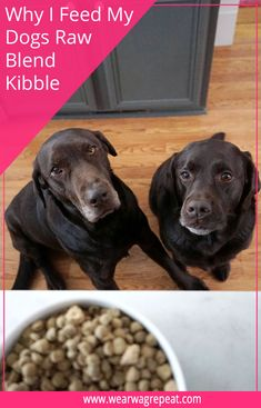 When choosing the best raw food for my dog I want high nutritional value and conveinience. For me that means Stella & Chewy's Raw Blend Kibble. Pet Supplies Plus, Online Pet Supplies, Animal Nutrition, Pet Nutrition, Pet Dogs, Pets, Doggies, Can Dogs Eat, Puppy Care
