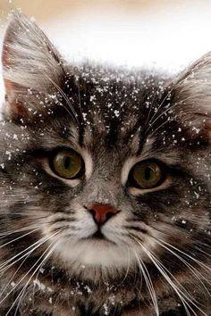 Beautiful Snow Kitty #snow #cats