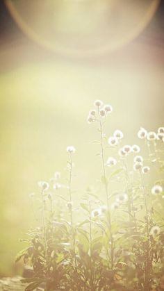 fade flower