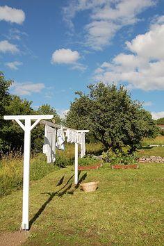 Jordgubbar med mjölk: Trädgård