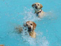 une journee dans la piscine pour chien lucky puppy 8   Piscine pour chiens [video]   soin plongeon piscine photo Lucky Puppy image GIF garde...