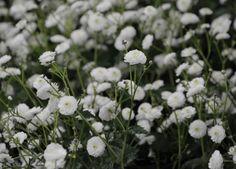 Flowerama | Arthur Road Landscapes