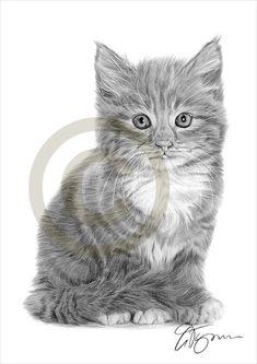 Bleistift Zeichnung Vorlagen Drucken einer inländischen Katze nach UK Künstler Gary Tymon. Originalgrafiken vollzog sich mit Bleistift schwarz Aquarell auf Aquarellpapier, und diese Drucke sind eine limitierte Auflage von nur 50. Drucken ist ist 11,75 Zoll x 8,25 Zoll (A4) und