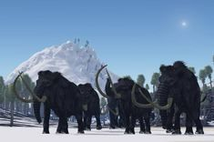 2. A long-standing theory proposes that early humans hunted the woolly mammoth to extinction. On the other hand, some scientists believe a global shift toward freezing temperatures did the beasts in. But perhaps no single culprit should be blamed. A study detailed online June 12, 2012, in the journal Nature Communications claims that a combination of factorscontributed to the mammoth's downfall.