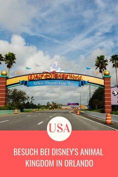 Freizeitpark Orlando: Besuch bei Disney's Animal Kingdom - Besuch bei Disney's Animal Kingdom in Orlando Imágenes efectivas que le pr - Pandora Disney World, Walt Disney World, Disney World Florida, Disney World Vacation, Disney Vacations, Disney Trips, Animal Kingdom Restaurants, Disney Animal Kingdom Lodge, Daytona Beach