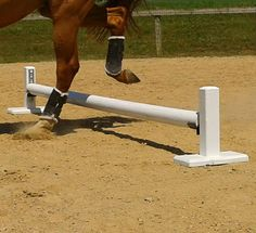 Lyndenetti: Cavaletti With Benefits | Horse Collaborative