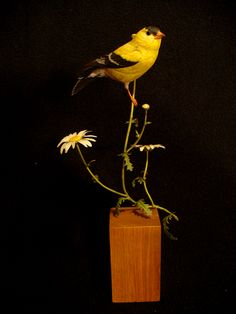 A goldfinch. can you believe this is carved out of wood?! Made by Gary Yoder.