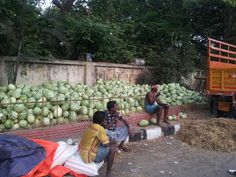 Water melons on sale