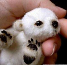 Panda blanco y negro. Bebés animales
