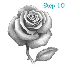 Rose Drawing Lesson 10