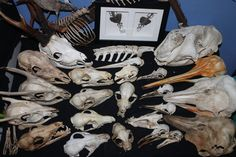 Skull collection by Monopolymurder on DeviantArt
