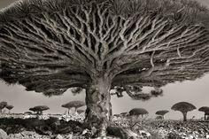 ancient-trees-beth-moon-8