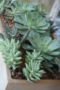 Detalhe de um dos inúmeros mini jardins que eu confecciono ...