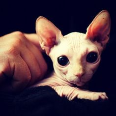 so great! wonder if there's any sphinxes out there looking for a home..
