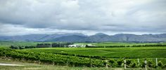 Yealands Winery Marlborough New Zealand