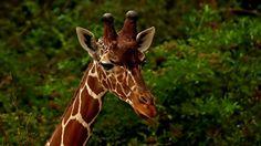 Der Ausblick in die neue Woche, ... ist ja vielversprechend. Nicht nur für Giraffen. :-)