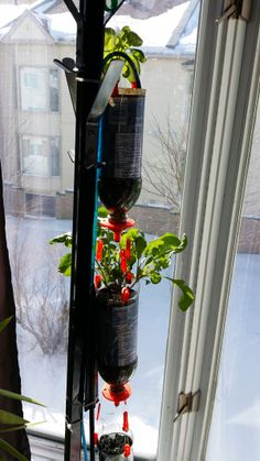 Our 3D-printed hydroponics system is telling us spring is just around the corner; just look at those prosperous plants! #3Dprinting #plants #projects
