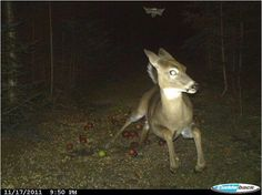 Check out the best trail camera photos we've ever seen. You'll crack up at some be amazed at the others.