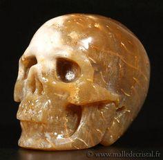 Crâne sculpté  Corail Fossile  Oeuvre Réaliste  par Malledecristal