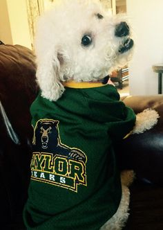#BaylorProud pup in a #Baylor jersey! #SicEm
