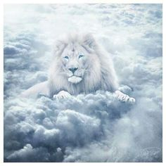 Lion of Judah<3