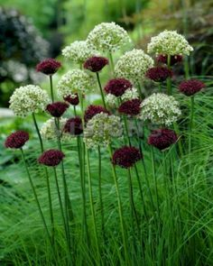 My Favorite Plant Combinations 69