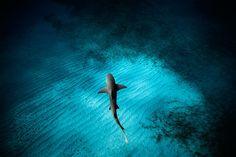 Focus sur les superbes clichés sous-marins du photographe Jorge Cervera Hauser. Les images de Jorge Cervera Hauser dévoile une vie.