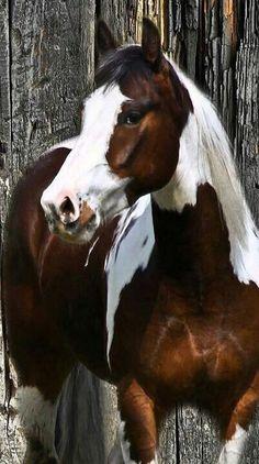Hermoso #caballo