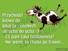 Przychodzi krowa do lekarza... Weekend Humor, Stupid Funny Memes, Man Humor, Good Mood, Funny Cute, Motto, Funny Tshirts, Quotations, Haha