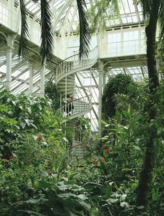 More pics of the Temperate House, Kew Gardens. my dream house!