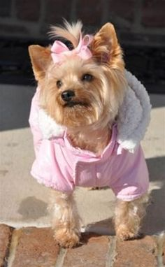 """Pink Snow Suit """"Ruffin It"""" <3 http://www.poshpuppyboutique.com/Pink_Snow_Suit_p/dd2-pfss-1109.htm"""