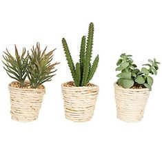 A great way to incorporate color and texture into your home decor, this set of succulents offer immediate appeal. From Vickerman. Succulent Pots, Planting Succulents, Potted Plants, Cactus Plants, Planting Flowers, Plant Pots, Small Cactus, Hanging Plants, Cacti
