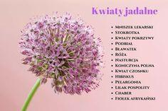 Kwiaty jadalne są niskokaloryczne i bardzo smaczne. Ich lista jest naprawdę imponująca. Większość z nich spotykamy na co dzień - rosną w naszych ogrodach, na łąkach i polach. W płatkach kwiatów wiele jest witamin i składników odżywczych. Są zatem pożywne i smaczne, a dodatkowo nadadzą potrawie charakteru i wzbogacą jej walory estetyczne. Kwiaty jadalne warto dodawać do sałatek, sosów, zup, kanapek. Warto wiedzieć, że wiele z nich wykorzystuje od wielu lat medycyna ludowa. Edible Flowers, Helpful Hints, Dandelion, Cabbage, Spices, Food And Drink, Hair Beauty, Herbs, Vegetables